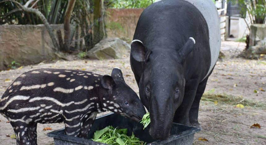 khao-kheow-zoo som sen